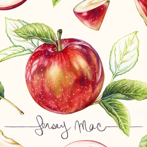 JosianneDufourIllustration_Jersey_Mac_Apples_Web