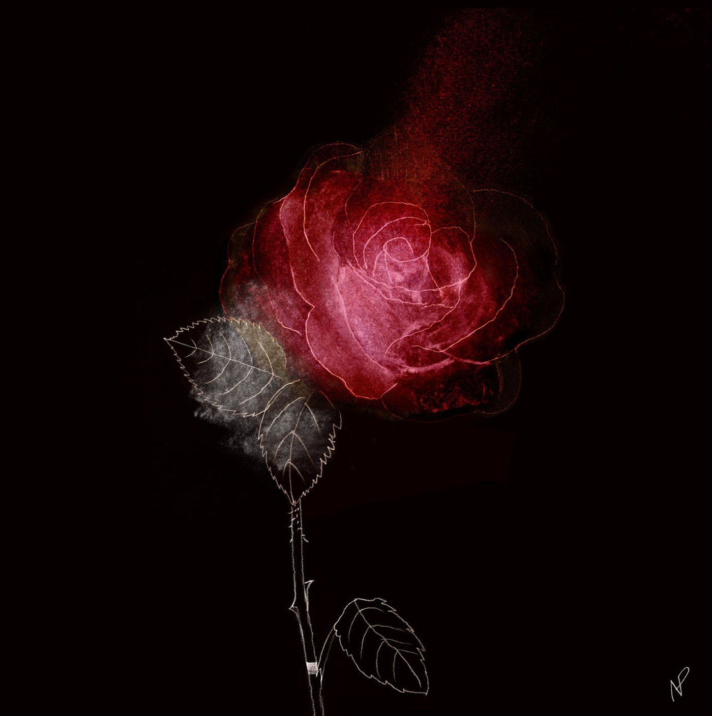 Ninon Pelletier - Rose rouge