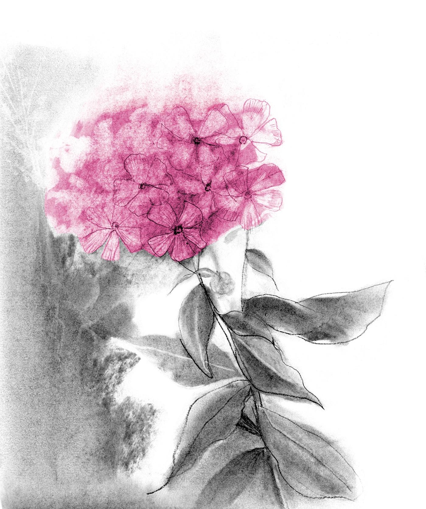 4270e671b3725c Illustration Québec - Ninon Pelletier - Dessins Fleurs et Souliers